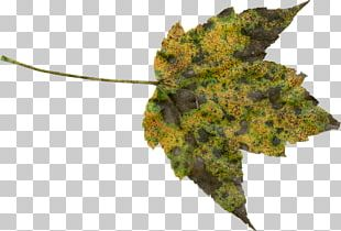 Autumn Leaf Color Autumn Leaf Color PNG