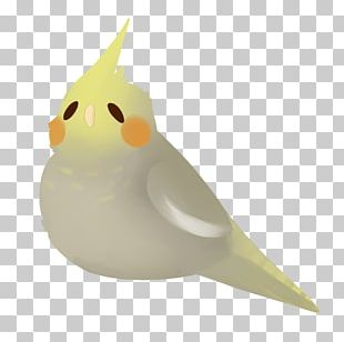 Beak Water Bird PNG