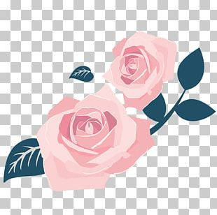 Garden Roses International Women's Day Centifolia Roses PNG
