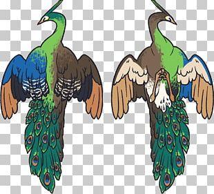 Phasianidae Feather Beak PNG