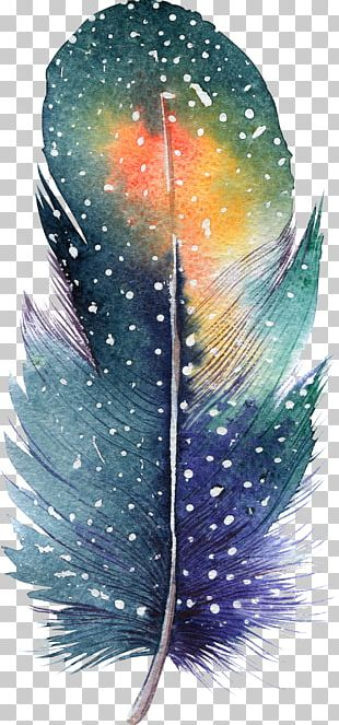 Feather Watercolor Painting Drawing Illustration PNG