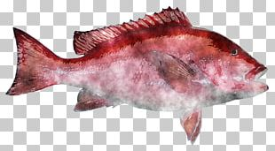 Northern Red Snapper Fish Products Salmon PNG