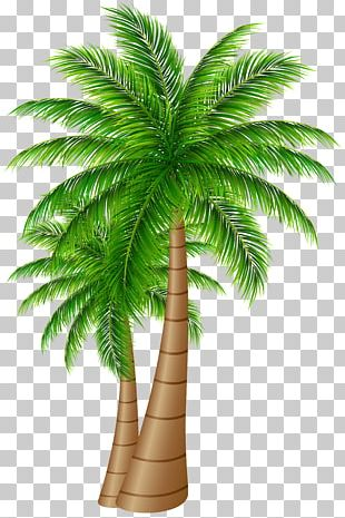 Palm Trees Coconut PNG