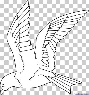 Bird Colouring Pages Coloring Book Flight Drawing PNG