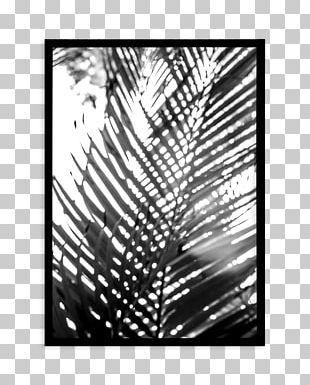 Photography Palm Springs Poster Font Palmier PNG
