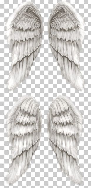 Cherub Angel Wing Angel Wing PNG