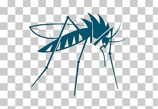 Mosquito Insect Bed Bug PNG