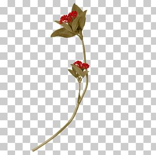 Rose Family Flora Cut Flowers Artificial Flower PNG