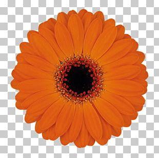Optical Illusion Optics Black Hole Color PNG