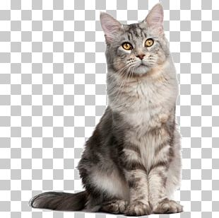 Pet Sitting Dog Norwegian Forest Cat Breed PNG
