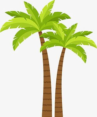 Coconut Tree Decoration Pattern PNG