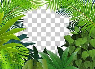 Tropical Rainforest Jungle Tropics PNG