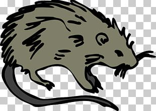 Brown Rat Rodent Laboratory Rat Mouse PNG