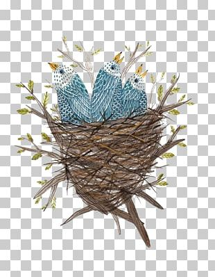 Edible Birds Nest Bird Nest Watercolor Painting PNG