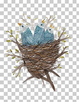 Edible Birds Nest Bird Nest Watercolor Painting PNG