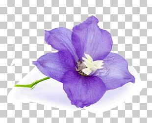 Birth Flower Birthday June PNG