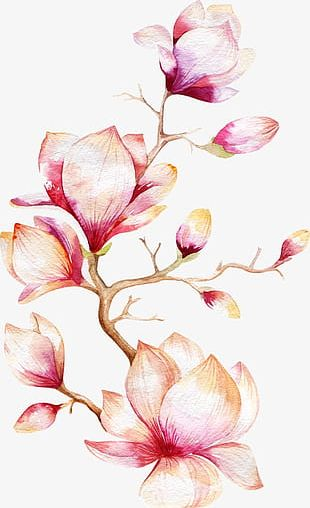 Orchid Tree PNG