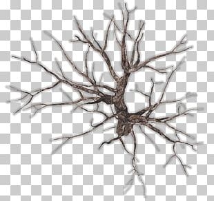 Twig Tree Branch Root PNG