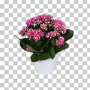 Annual Plant Cut Flowers Shrub Flowerpot PNG