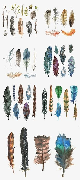 Hand-painted Watercolor Feather PNG