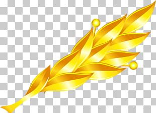Leaf Gold Petal PNG