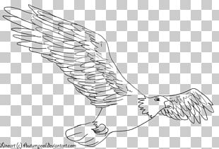 Line Art Drawing Birds Eagle PNG