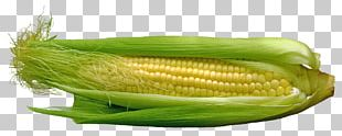 Corn On The Cob Maize Vegetable Food PNG