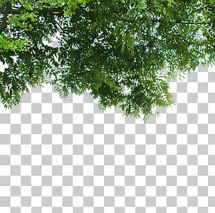 Nature Poster Landscape PNG