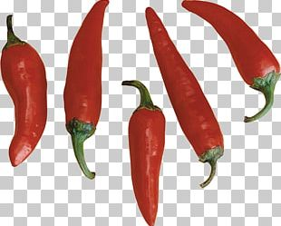 Habanero Bird's Eye Chili Tabasco Pepper Jalapeño Serrano Pepper PNG