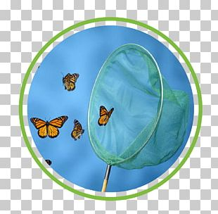 Butterfly Net Stock Photography PNG