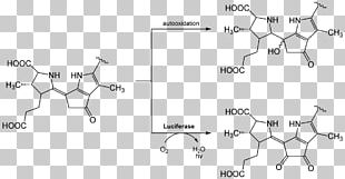 Firefly Luciferin Luciferase Bioluminescence Chemical Reaction PNG
