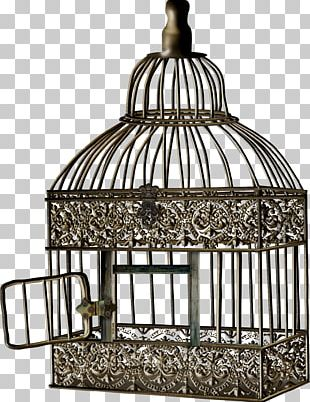 Bird Cage Cell PNG