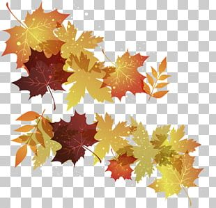 Maple Leaf Autumn Leaves PNG