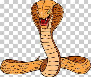 Snake King Cobra Free Content PNG