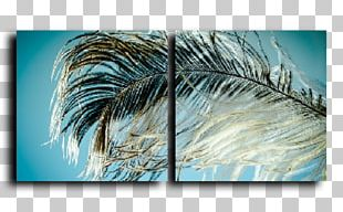 Feather Bird Plumage PNG