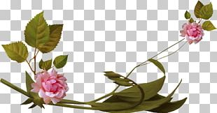 Flower Greeting Blue Rose PNG