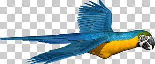 Macaw Parakeet Feather Beak Pet PNG