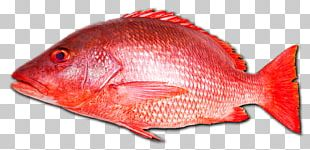 Northern Red Snapper Fish Seafood Vermilion Snapper PNG