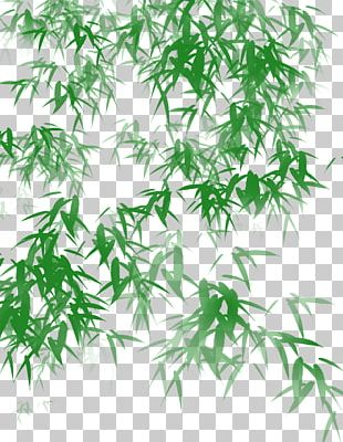 Bamboo Shoot Leaf Icon PNG