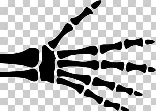Hand X Ray Png : Also, find more png clipart about same clipart,pencil clipart,weapon clip art.