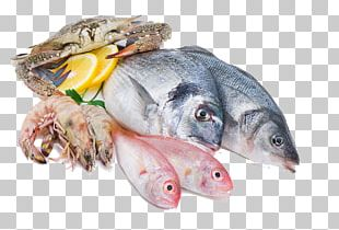 Squid As Food Fish Seafood Meat PNG