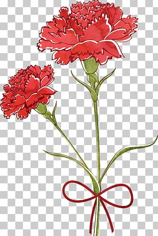 Carnation Flower Drawing Watercolor Painting PNG