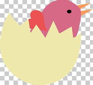 Bird Egg Bird Nest PNG