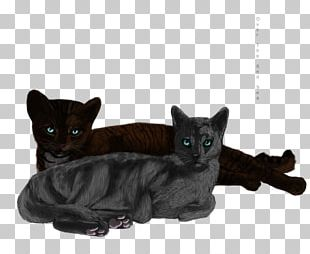 Black Cat Bombay Cat Korat Domestic Short-haired Cat Whiskers PNG