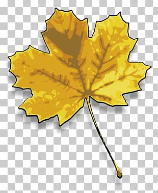 Sugar Maple Red Maple Maple Leaf PNG