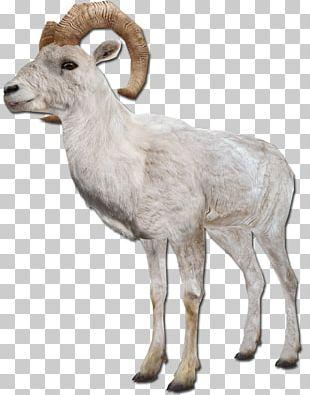 Barbary Sheep Goat Argali Farm Animals: Sheep PNG