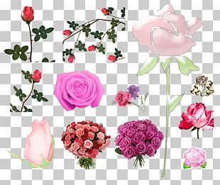Garden Roses Pink Centifolia Roses Cut Flowers PNG