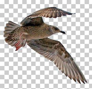 Seabird Water Bird Beak Feather PNG