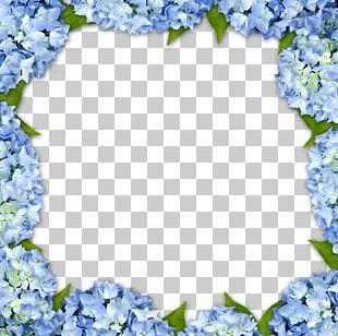 Hydrangea Frame Flower PNG