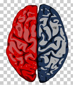 Brain Cerebrum Cerebral Cortex Cerebral Hemisphere Science PNG